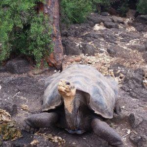 Reise Hunter Galapagos Schildkröte DarwinCenter4