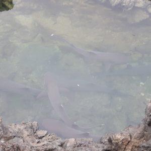 Reise Hunter Galapagos Riffhaie