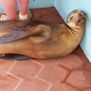 Reise Hunter Galapagos SantaCruz Seelöwe6