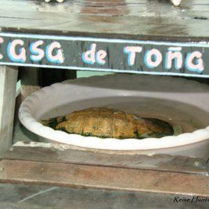 Reise Hunter Kuba Havana Schildkröte