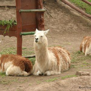 Reise Hunter Quito Mitad del Mundo Lamas
