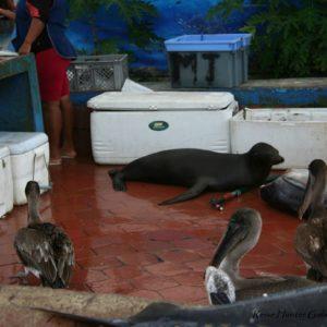 Reise Hunter Galapagos Fischmarkt3