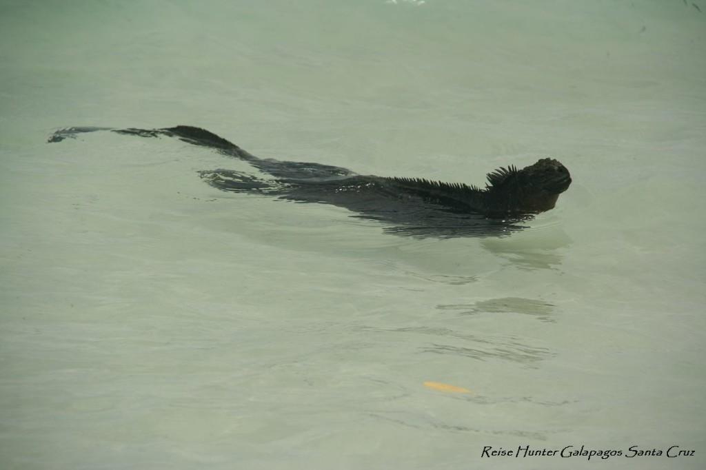 Reise Hunter Galapagos IguanaMeer