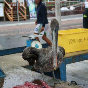 Reise Hunter Galapagos Santa Cruz Fischmarkt2
