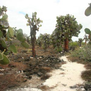 Reise Hunter Galapagos Santa Cruz Flora