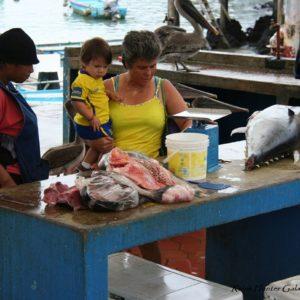 Reise Hunter Galapagos Santa Cruz Fischmarkt