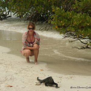 Reise Hunter Galapagos Santa Cruz Iguana