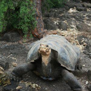Reise Hunter Galapagos Schildkröte DarwinCenter