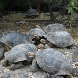 Reise Hunter Galapagos Schildkröten DarwinCenter