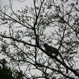 Reise Hunter Ecuador Kappuziner Äffchen2