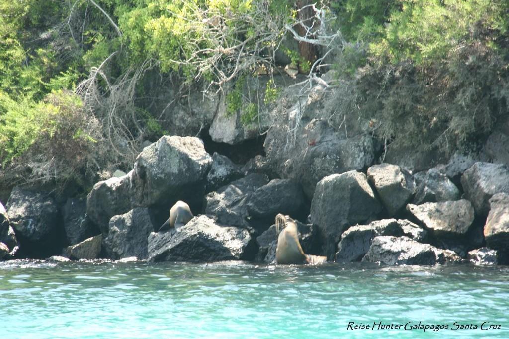 Reise Hunter Galapagos Seelöwen1
