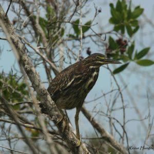 Reise Hunter Galapagos Islabela Vogel