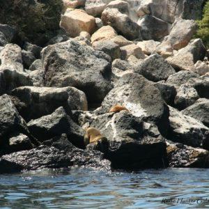 Reise Hunter Galapagos Seelöwen2