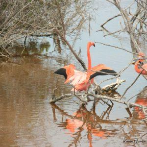 Reise Hunter Galapagos Islabela Flamingos2