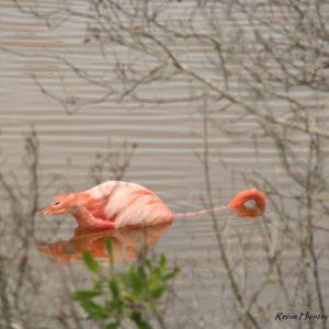 Reise Hunter Galapagos Islabela Flamingos