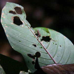 Reise Hunter Ecuador Amazonas Frosch