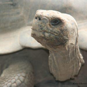 Reise Hunter Galapagos Schildkröte Gesicht