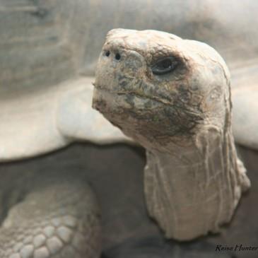 Galapagos – ein Naturparadies mit griechischen Zügen