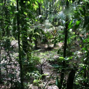 Reise Hunter Ecuador Amazonas WanderungSumpf