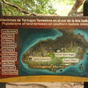 Reise Hunter Galapagos Islabela Schildkrötenstation