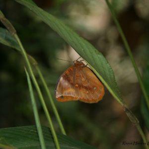 Reise Hunter Ecuador Amazonas Schmetterling