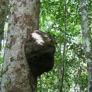 Reise Hunter Ecuador Amazonas Termiten