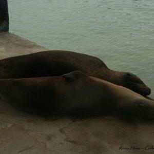 Reise Hunter Galapagos Seelöwen Paar
