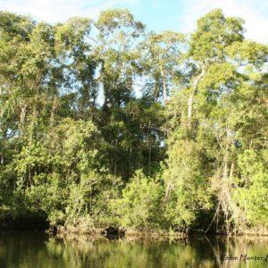 Reise Hunter Ecuador Amazonas Regenwald