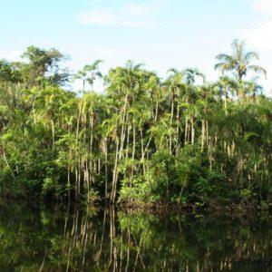 Reise Hunter Ecuador Amazonas Regenwald2