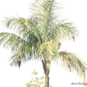 Reise Hunter Ecuador Amazonas PalmemitNestern