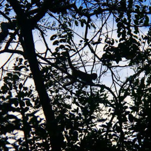 Reise Hunter Ecuador Amazonas KappuzinerAffe
