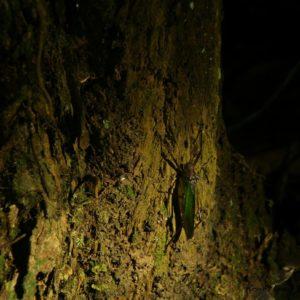 Reise Hunter Amazonas Grasshüpfer
