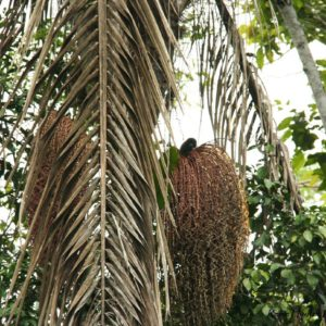 Reise Hunter Amazonas Baum Ratte