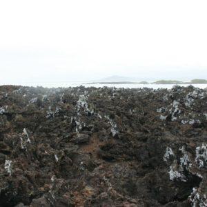 Reise Hunter Galapagos Isabela Vulkangestein