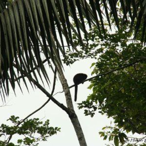 Reise Hunter Amazonas Mönchsaffe