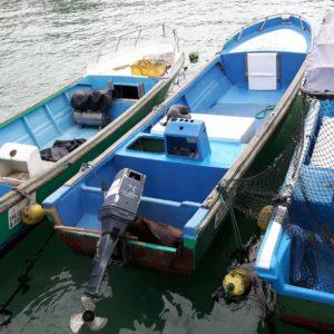 Reise Hunter Galapagos Isabela Seelöwen2