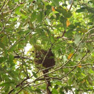 Reise Hunter Amazonas Faultier