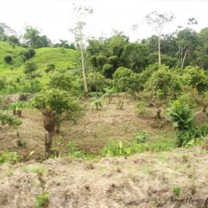 Reise Hunter Ecuador Andenland2
