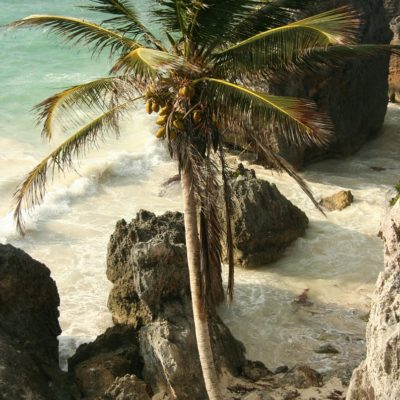 Reise Hunter Mexiko Tulum Strand Palme 2