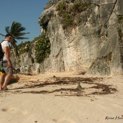 Reise Hunter Mexiko Tulum Strand Echse 2