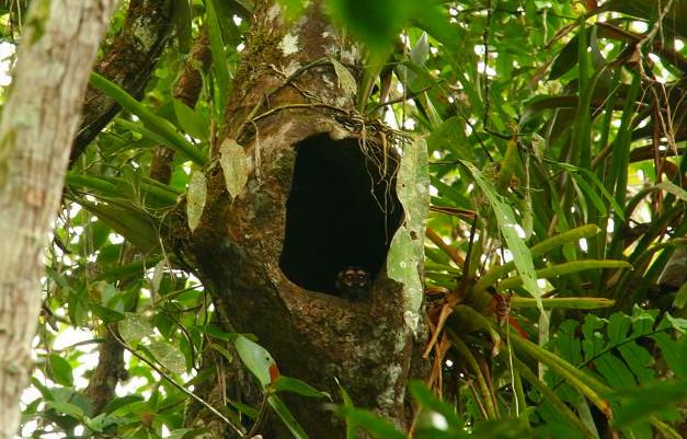 Reise Hunter Amazonas Ratte Baum
