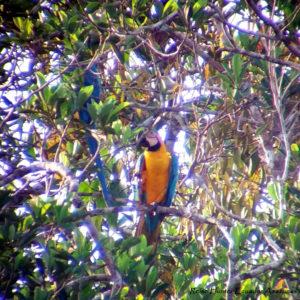 Reise Hunter Ecuador Amazonas Aras