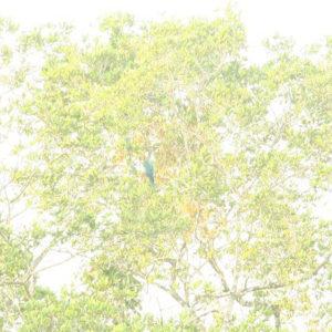 Reise Hunter Ecuador Amazonas Aras Blau