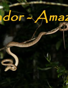 Ecuador – Amazonas