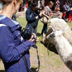 Reise Hunter Cusco Lamas u Alpakas J