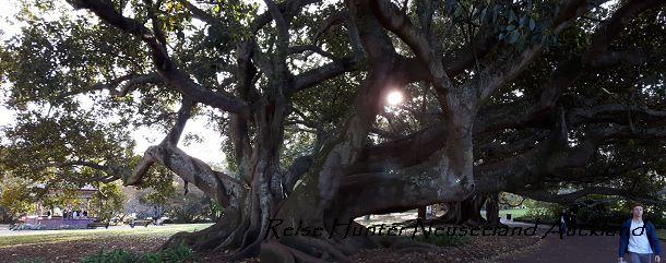 Reise Hunter Neuseeland Auckland Bäume
