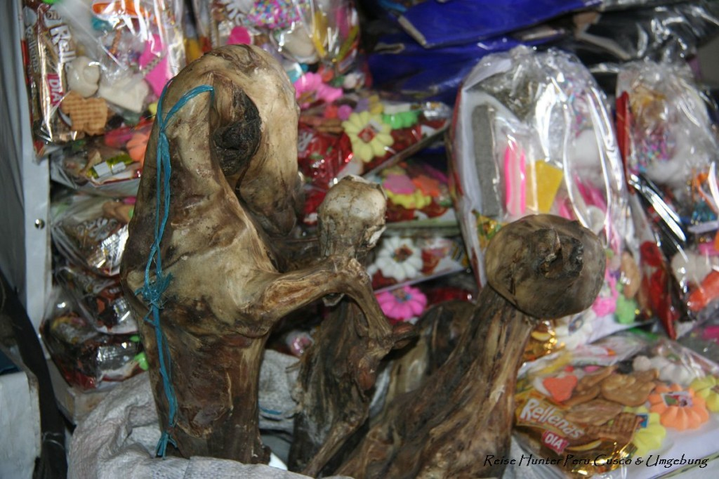 Reise Hunter Cusco Lama Fötus