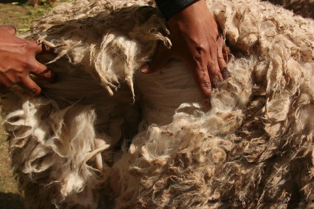 Reise Hunter Cusco Alpaka Wolle