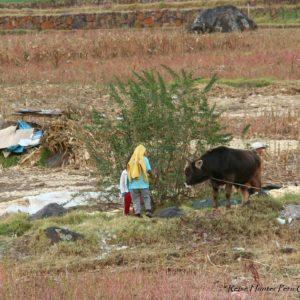 Reise Hunter Pisaq Landwirtschaft
