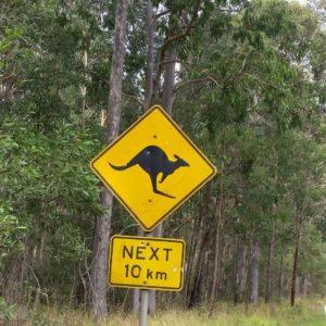 Reise Hunter Australien Achtung Känguru
